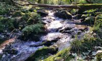 Zwischen Tiefenbach und Luppbode